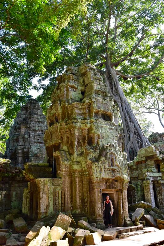 cambodia ta prohm temple trees siem reap